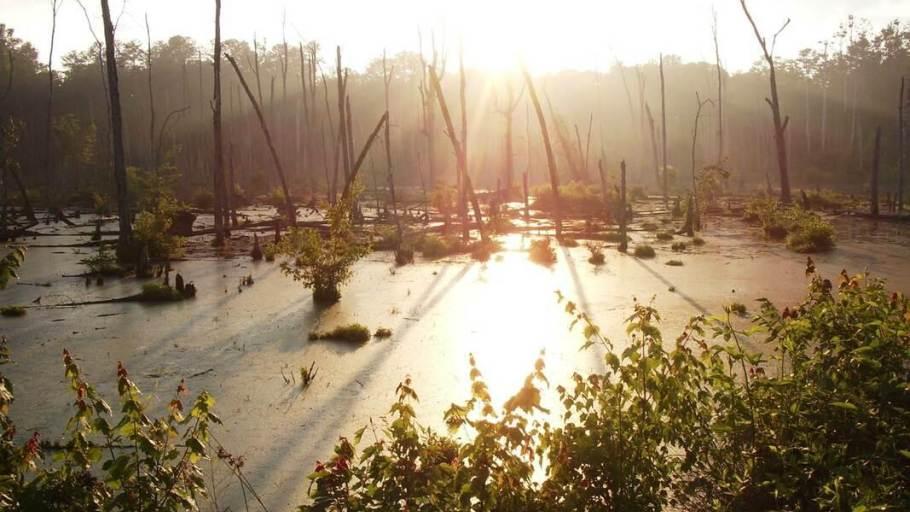 Ellerbe Creek Watershed Urban Nature Reserves